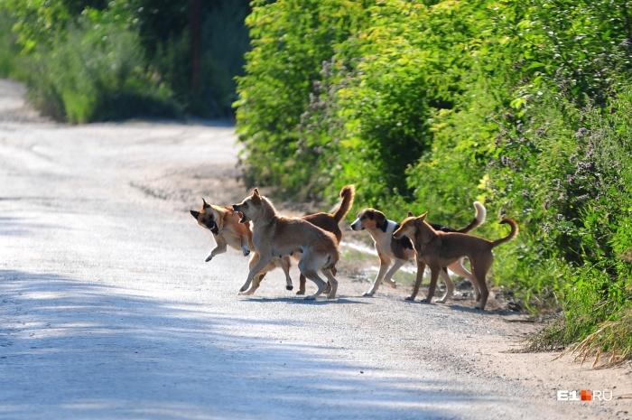 Собаки без поводков и намордников могут быть очень опасны
