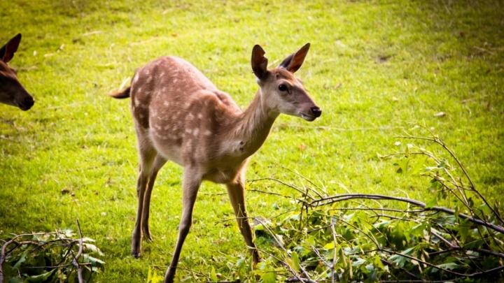 В Курганской области охотники незаконно добыли четыре косули и кабана