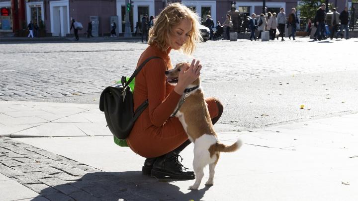 Что делать, если вашу собаку отравили догхантеры