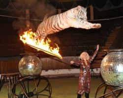 В Уфимском цирке выступают белые тигры