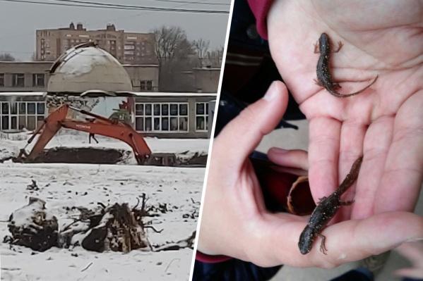 Горожане переживают за сохранность краснокнижных рептилий