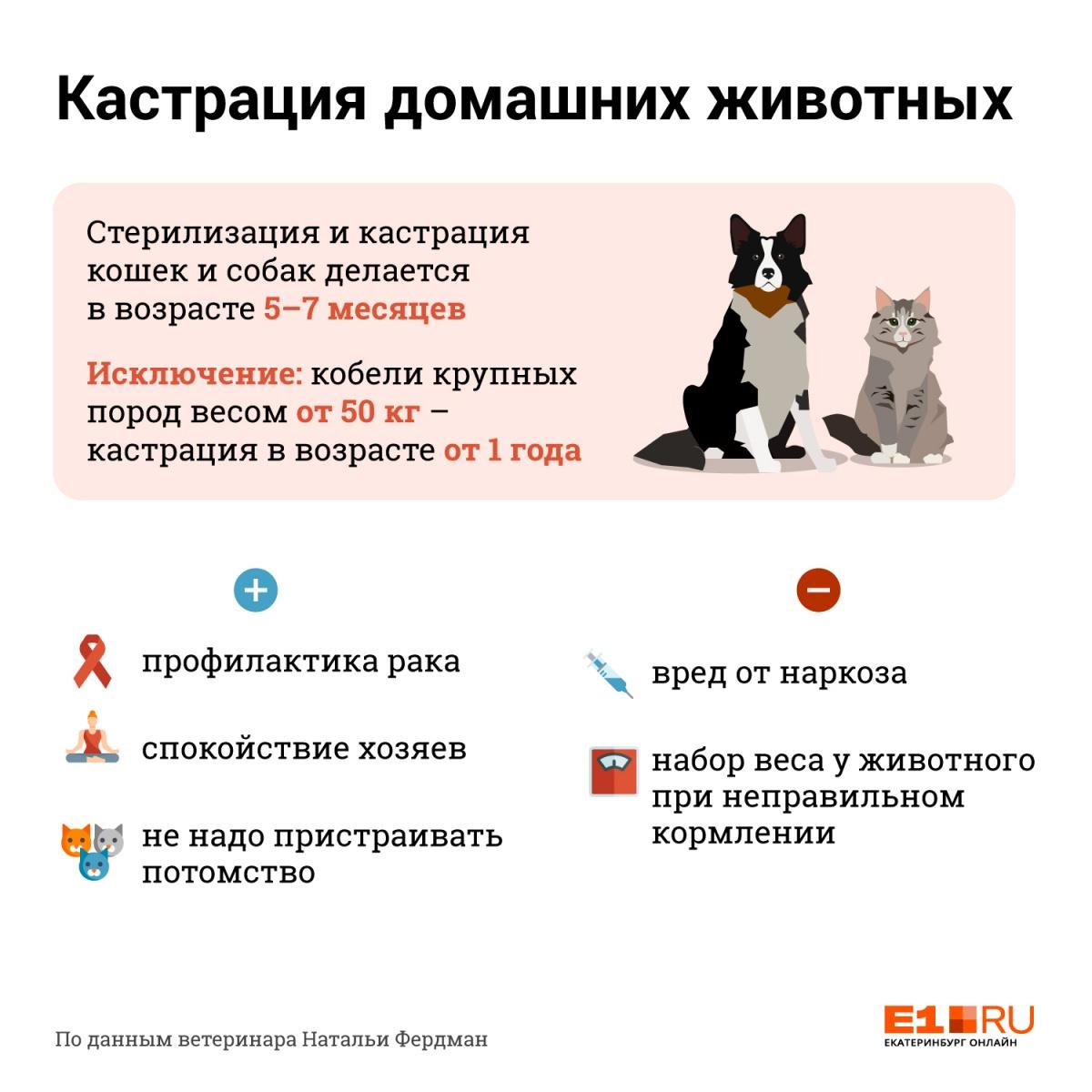 Инструкция E1.RU: когда нужно кастрировать домашних животных и зачем вообще это делать