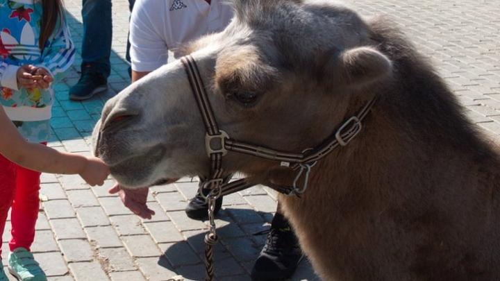 Крупным и краснокнижным животным Самарского зоопарка подыскали новый дом