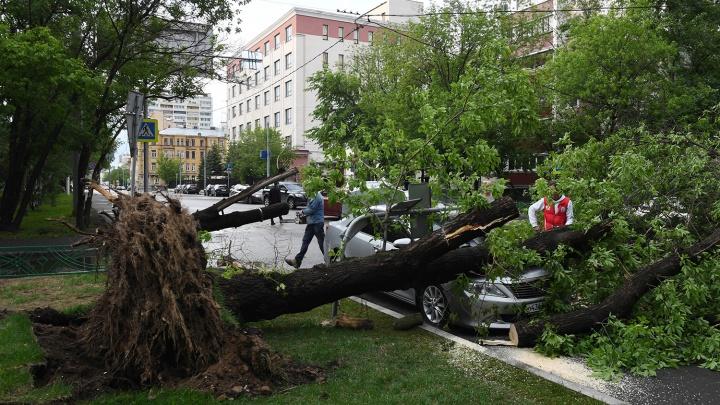 Синоптики оценили вероятность московского урагана в Новосибирске