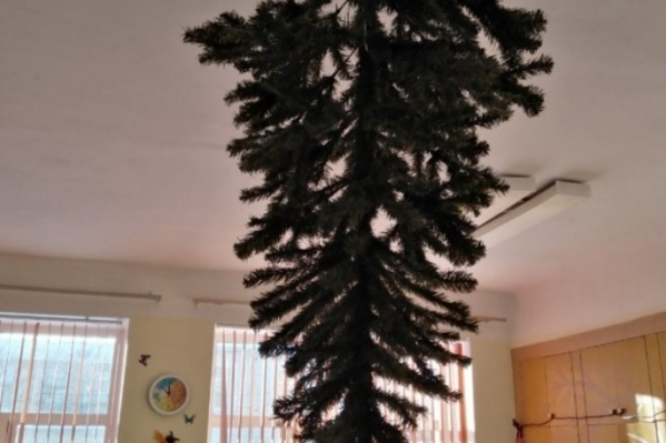 Дерево прикрепили к потолку