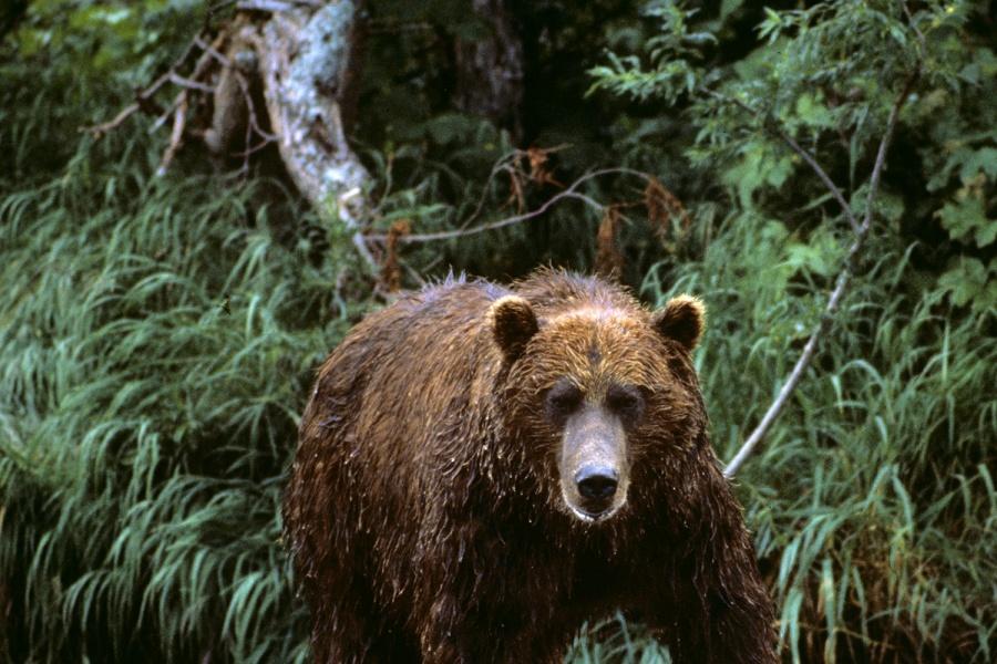 Медведица смедвежонком вышли излеса наМочищенское шоссе