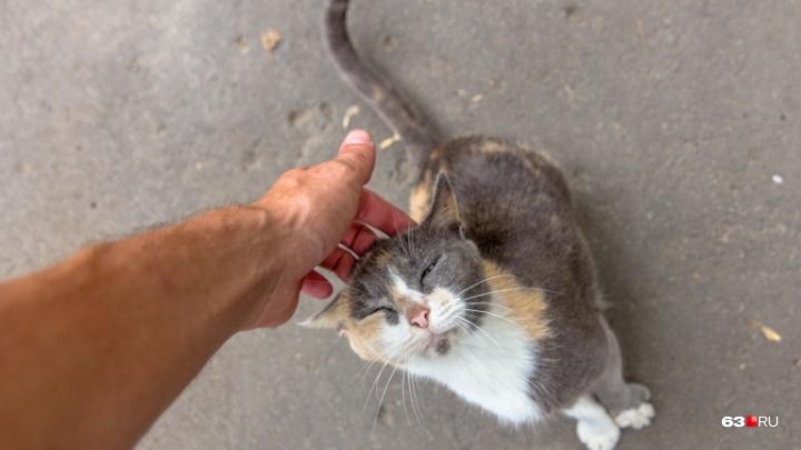Самара вошла в число самых кошачьих городов России