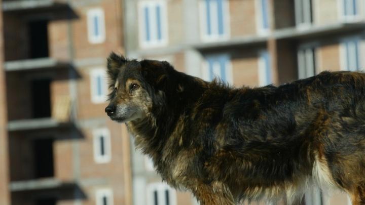 Бездомные собаки загнали 10-летнего мальчика на дерево