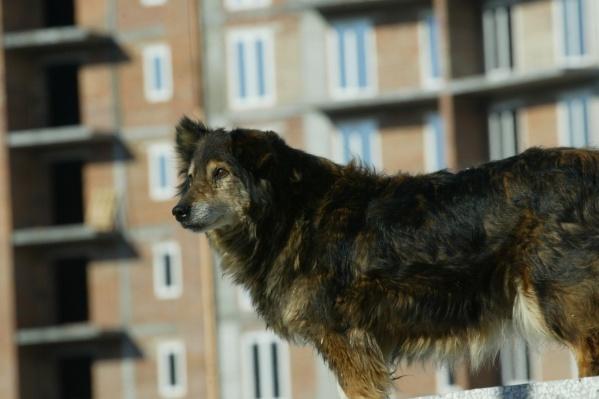 Случай с бездомными собаками для спасателей неординарный — обычно они, наоборот, выезжают спасать животных