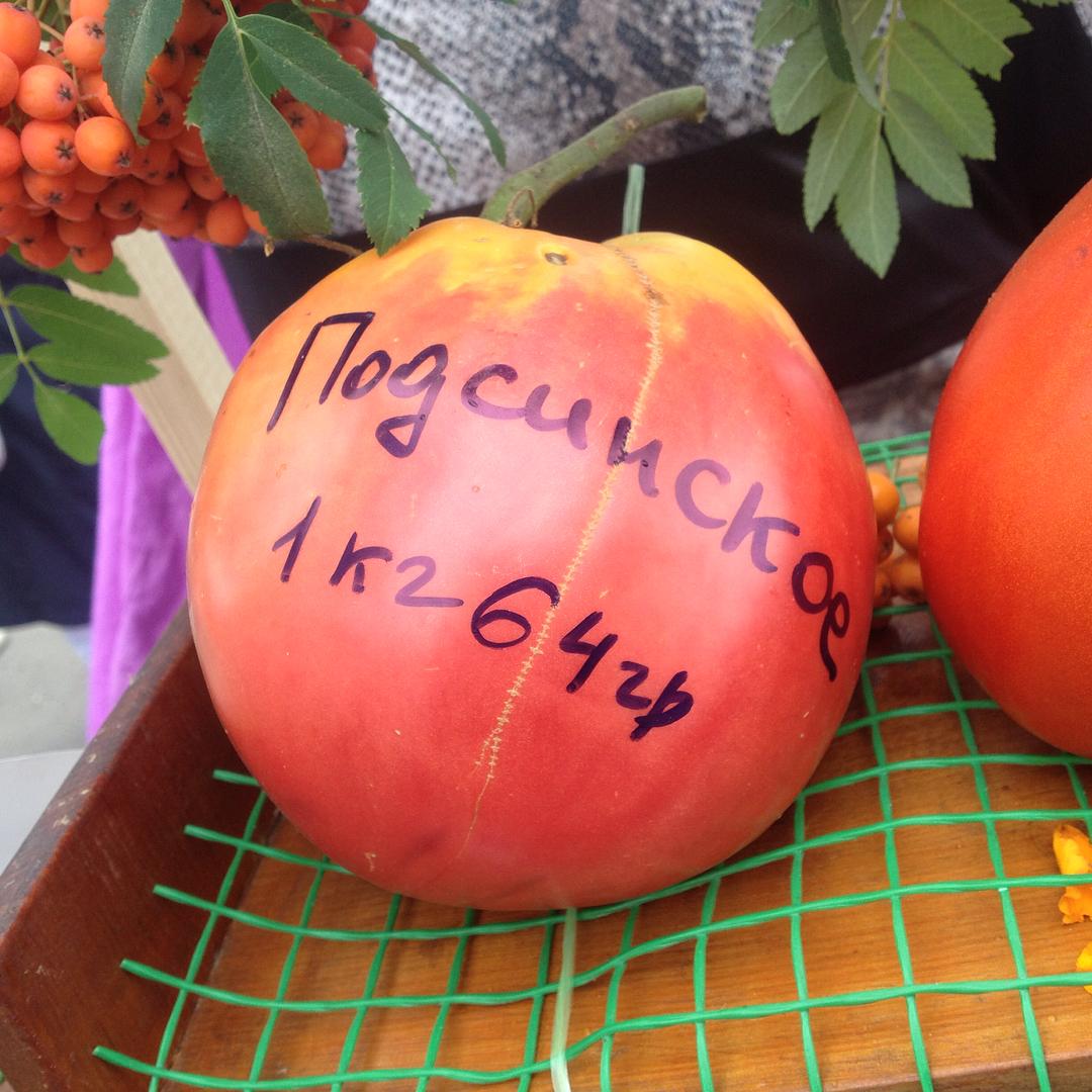 Судя по весу этот помидор почти стал победителем