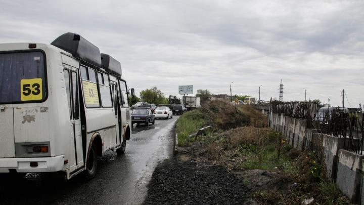 Дело к развязке: губернатор отсрочил скандальную вырубку деревьев на Дарвина