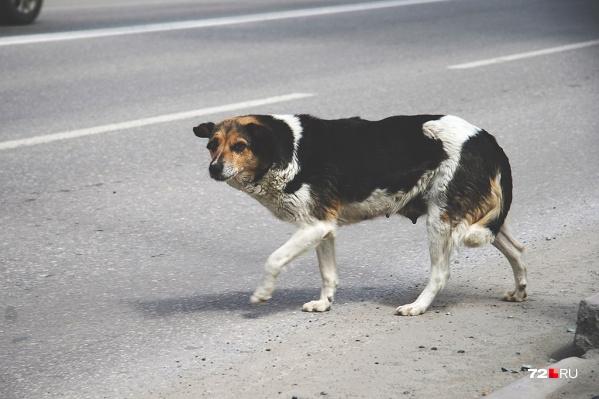 Ружьё, из которого мужчина застрелил бездомную собаку, находилось у него незаконно