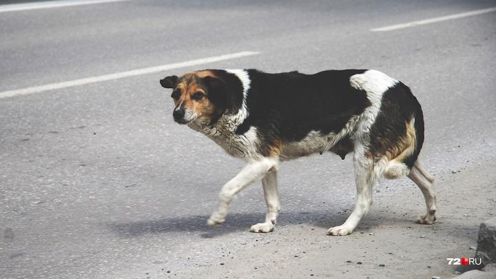 В Тюмени будут судить мужчину за то, что он застрелил бездомную собаку и угрожал убить соседку
