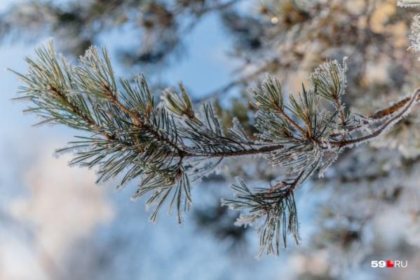 В выходные выпадет небольшой снег, начало зимы будет мягким