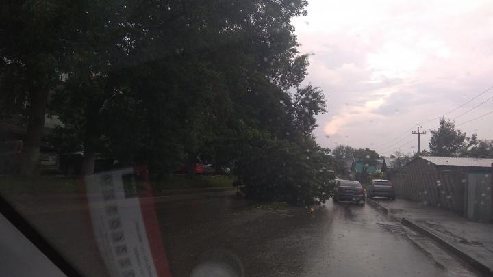 В Уфе дерево упало на проезжающую машину