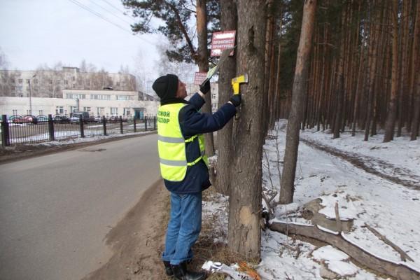 Ярославцев будут штрафовать на 500 тысяч рублей за травмирование деревьев