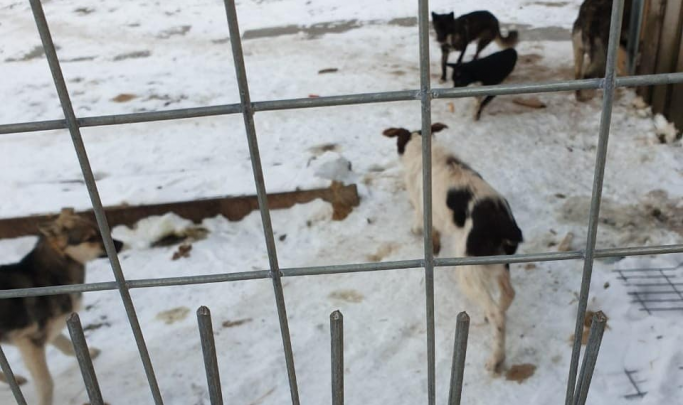 Зоозащитники требуют от властей Заводоуковска разорвать контракт со свердловской фирмой по отлову собак