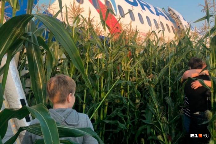 Самолет был вынужден сесть в поле после столкновения со стаей птиц
