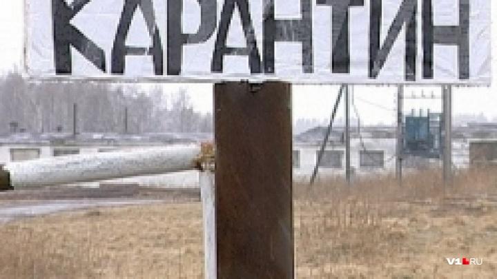 Анализы положительные: в Ленинском районе ввели карантин по бруцеллезу