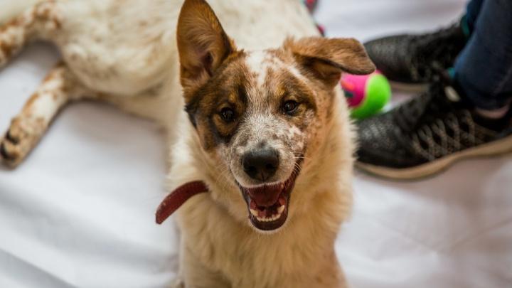 Новосибирцы забрали домой 8 щенков с тяжелой судьбой