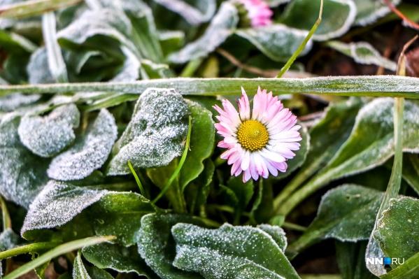 До зимы всего две недели, а на клумбах до сих пор кое-где можно найти цветы