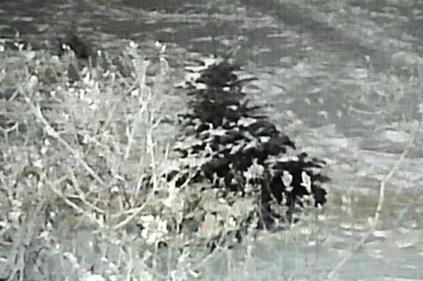 Чтобы спилить дерево, вор лёг под него