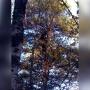 «Поднимаю голову, а там он»: утром на Яграх девушка вместо белки на дереве увидела медведя