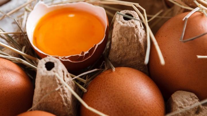 Золото за яркий желток: яичная площадка «Чебаркульской птицы» названа лучшей в регионе