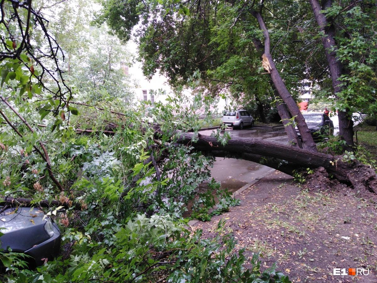 В переулке Степном из земли вырвало дерево