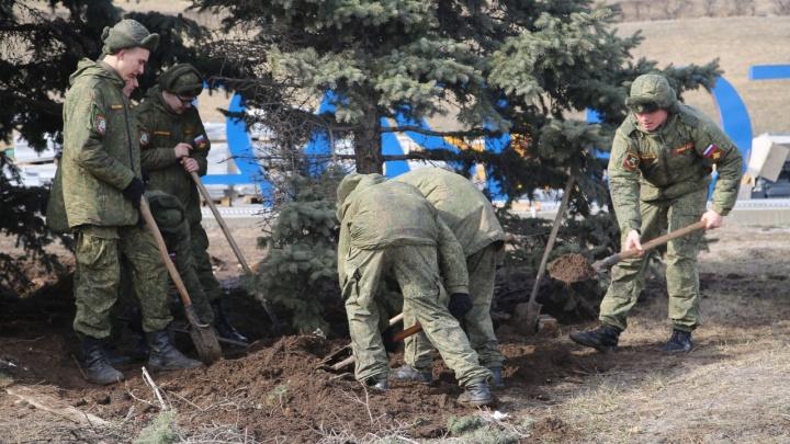 «Чиновники хотели вырубить»: корчевание елей на набережной Волгограда проверила военная прокуратура