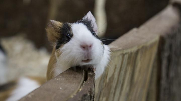 В уфимском контактном зоопарке забыли привить животных от бешенства