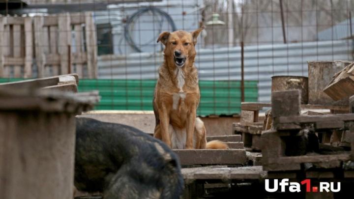 В Уфе на школьника напала стая собак