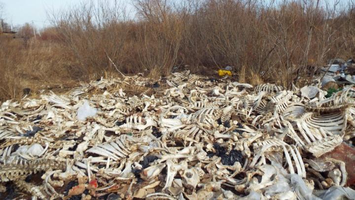 Из-за найденных под Курганом костей следователи возбудили уголовное дело