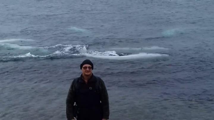 Зубатые киты приплыли к острову на севере края и покрасовались на камеру