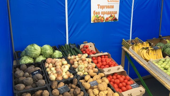 В Новосибирске начали торговать овощами в палатках без продавцов