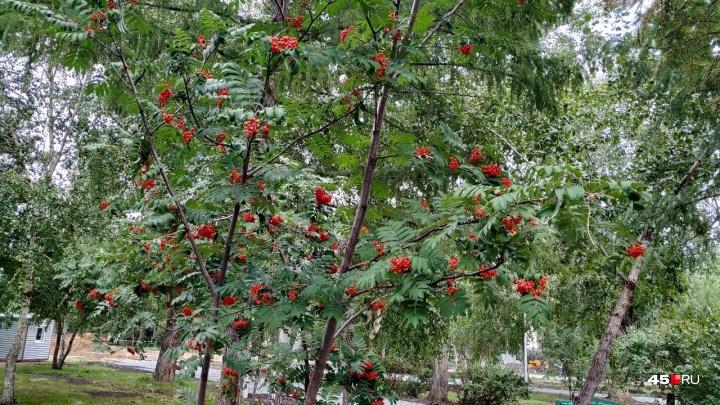 Сентябрь в Курганской области: будет ли бабье лето