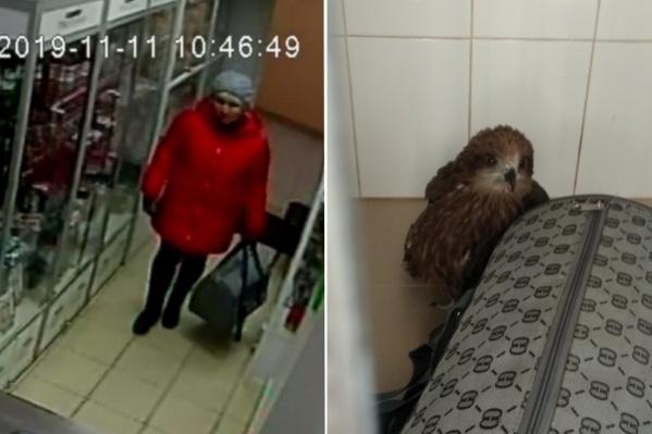 Птицу в клинику подбросила женщина в красной куртке