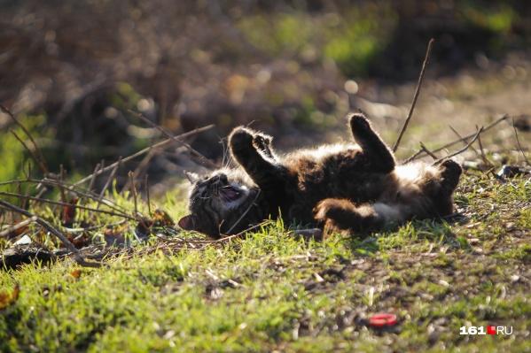 Ростовским котикам будущая зима явно придется по нраву
