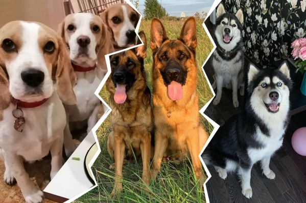 Влюблённый и преданный взгляд собак — счастье для любого хозяина