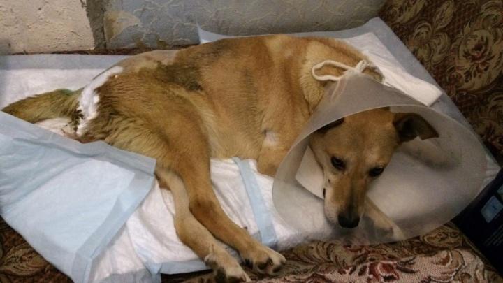 Рождественское чудо: как архангелогородцы спасают «Богом данную» собаку