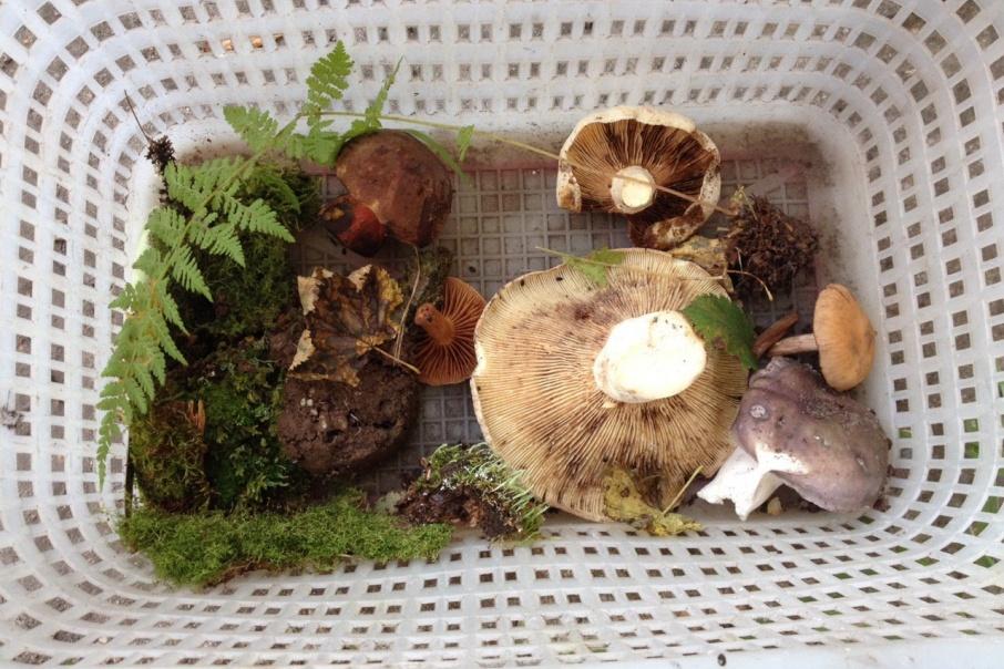 грибы в башкирии 2016 фото