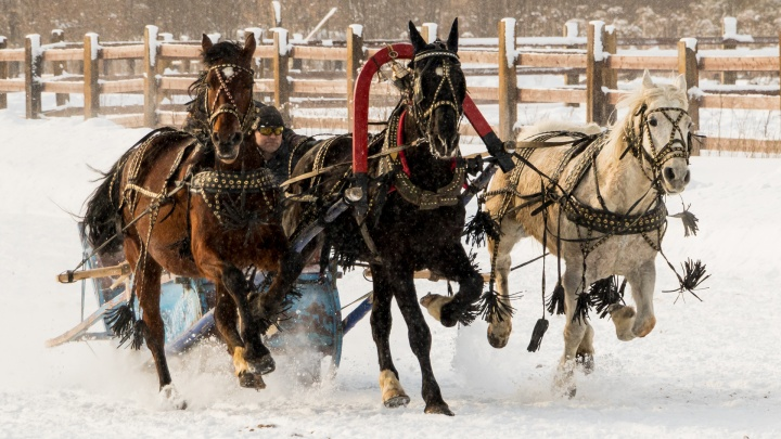 Скачки в Усть-Качке. Фоторепортаж с ежегодных зимних конноспортивных соревнований