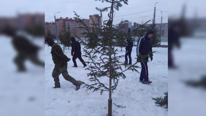 «Кратковременное благоустройство»: чиновники нашли как объяснить высадку срубленных елей на Копылова