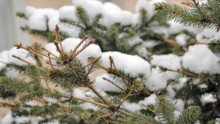 В Омске на один день резко потеплеет