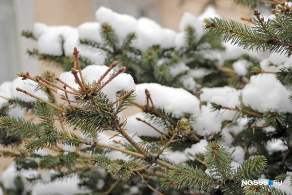 Всю неделю в Омске будет идти снег