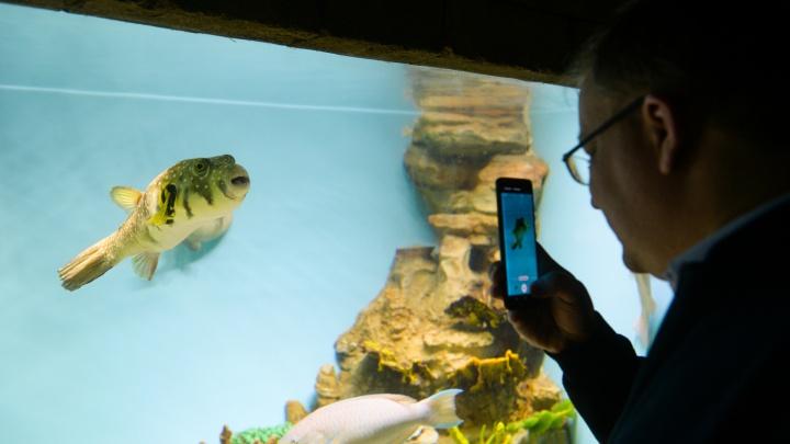 Подводное царство: кормим акул и рассматриваем других обитателей екатеринбургского океанариума