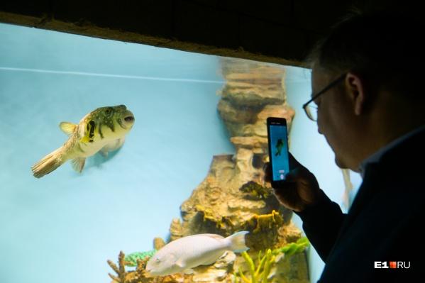 Во время прогулки по океанариуму хочется сфотографировать каждого его обитателя