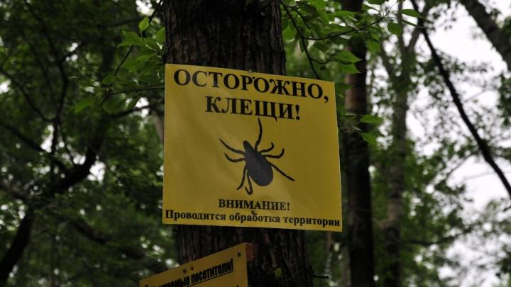 В Екатеринбурге от клещевого энцефалита умерла женщина