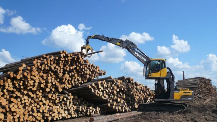 Крупнейший оператор лесосырья в Архангельске потратит на технопарк два миллиарда рублей