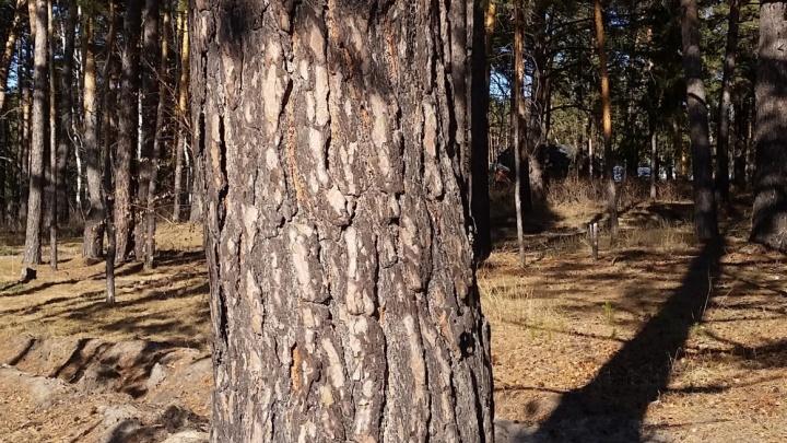 В Кетовском районе жители пытаются освободить леса от застройки